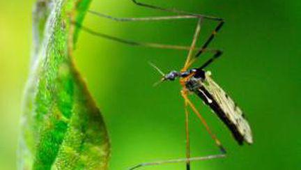 Cum să previi şi să tratezi înţepăturile de ţânţari