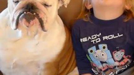 Video: un copil şi câinele lui adorm la TV