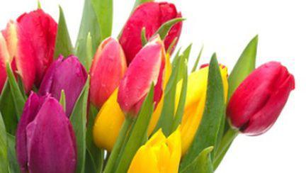 Beneficiile terapiei cu flori
