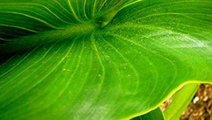 Slăbeşte cu plante