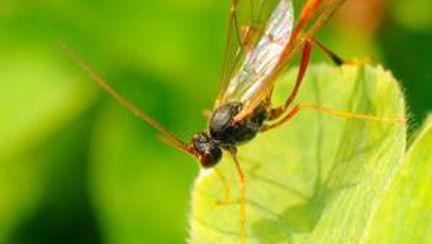 Tratamente eficiente pentru înţepăturile de insecte