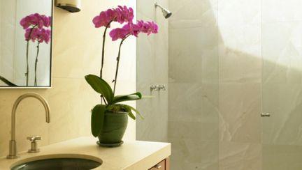 Pasiunea ta: Orhideea, floarea bijuterie
