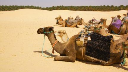 Călătorii: Pe urmele Şeherezadei în Tunisia