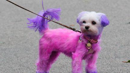 Încă o vedetă şi-a vopsit câinele roz! Ghici cine!