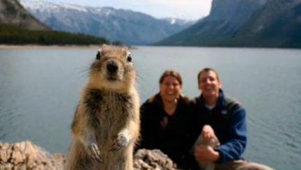 Poze haioase: photobombs cu animale. Vezi ce înseamnă!