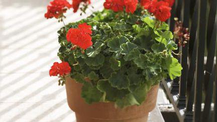 Cele mai spectaculoase şi rezistente plante de apartament!
