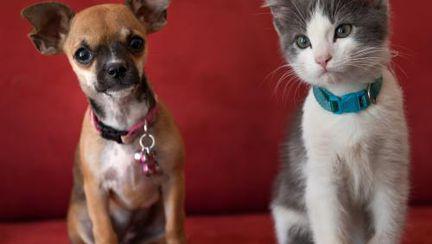 Poze haioase: Căţeluşa Beyonce, cel mai mic animal salvat vreodată de veterinari
