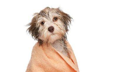Căţei & pisici: Cum le faci baie în sezonul rece