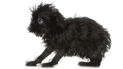 Şocant: Top 4 cele mai urâte animale din lume