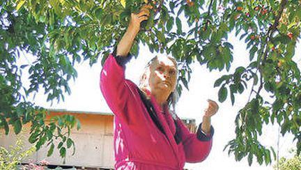 De ziua ei, Zina Dumitrescu petrece la iarbă verde, cu lăutari | EXCLUSIV