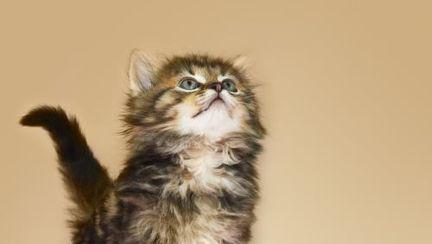 Animale: Ce-şi doresc pisicile