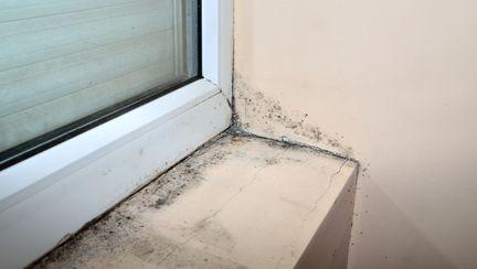 camera cu mucegai