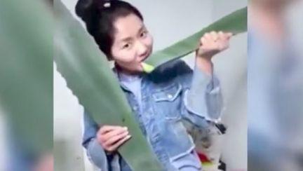 O femeie s-a otrăvit confundând aloe vera cu o plantă toxică