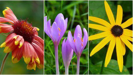 Poze cu flori de toamnă. Cum plantezi florile în grădina sau în ghiveci