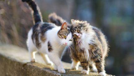 lucruri pe care nu le stiai despre pisici