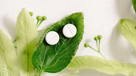 Antibiotic care poate salva multe vieți, descoperit într-o floare ornamentală