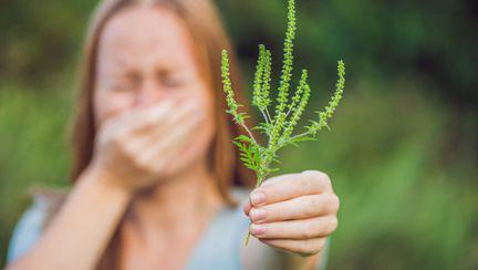 femeie stranut alergie ambrozie