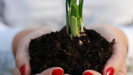 Planteaza toamna bulbi ca sa ai primavara flori