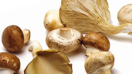 Aproape totul despre ciuperci