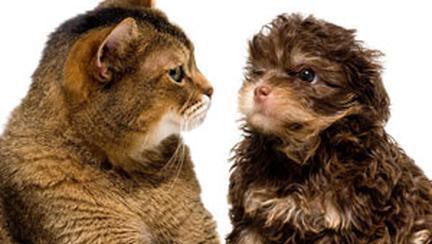 Castrarea (sterilizarea) animalului de companie
