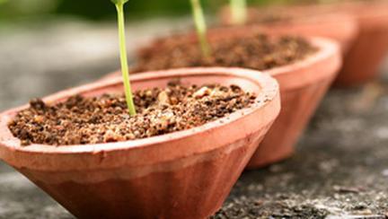 Cultiva-ti singura legumele!