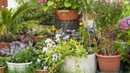 Plante pentru gradina ta