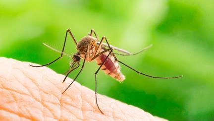 7 boli mortale pe care le transmit țânțarii