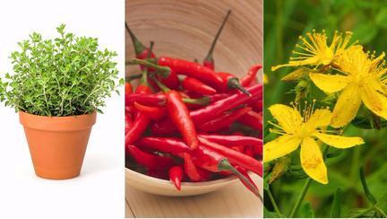 plante care te apără de rele