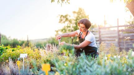 Cum să transformi orice curte într-o grădină colorată de flori, în 5 pași simpli