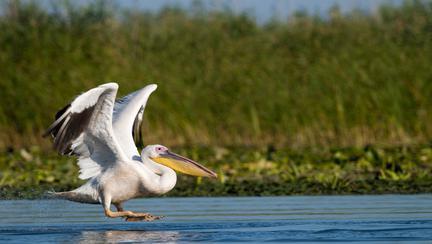 (P) O vară de poveste în Delta Dunării