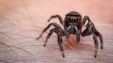 cum tratezi rapid mușcătura de păianjen