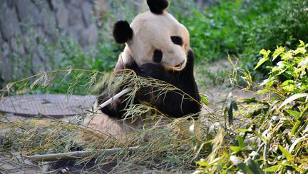 Cele mai frumoase grădini zoologice