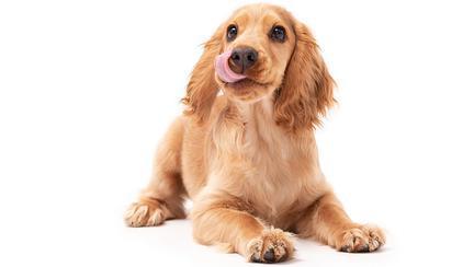 De ce iubim câinii? Trei motive susținute de cercetări științifice