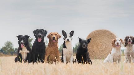 Se deschide primul muzeu din România dedicat câinilor fără stăpân
