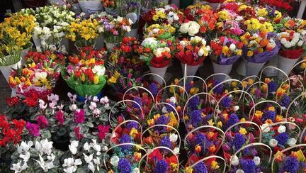 cţt costă florile de 1 şi 8 martie