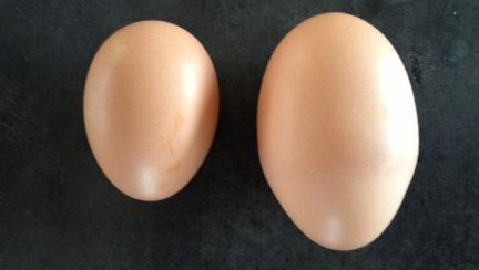 A găsit în cuibar un ou imens, apoi l-a spart imediat. Este uimitor ce se afla în el