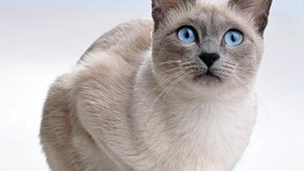 Descifreaza limbajul corporal al pisicii tale