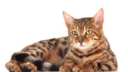 Purina ONE pentru pisici – sanatate vizibila in prezent si viitor (P)