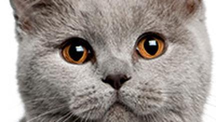 Ora de masa a pisicilor