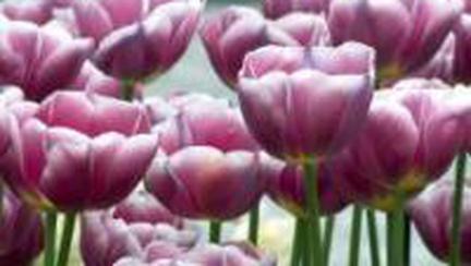 O floare si doi gradinari? Mai bine un gradinar si doua flori.