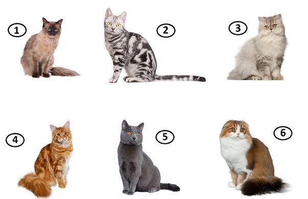 Test: Alege pisica preferată și vezi ce spune despre tine