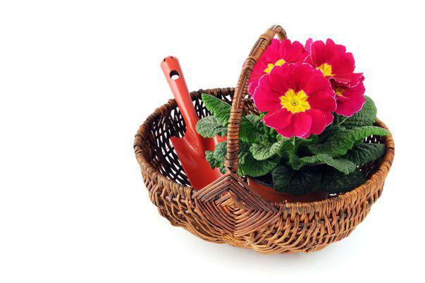 Cum revigorezi florile din ghivece la sfârșit de iarnă