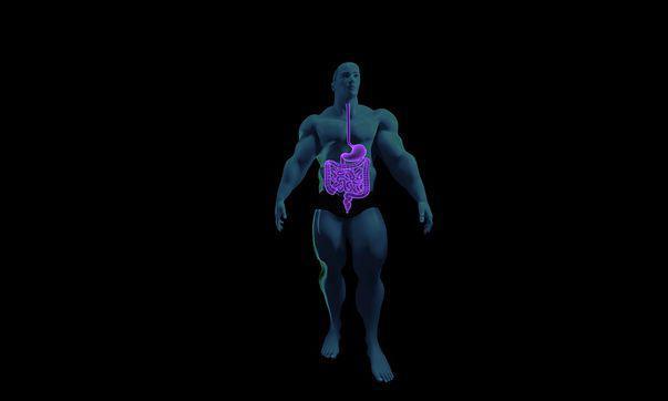 Boala celiacă este o afecțiune care necesită respectarea unei diete fără gluten. Imagine cu intestinele