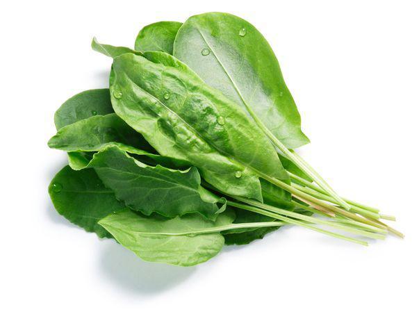 Cele mai bune diuretice pentru detoxifierea de primăvară. Osul-iepurelui