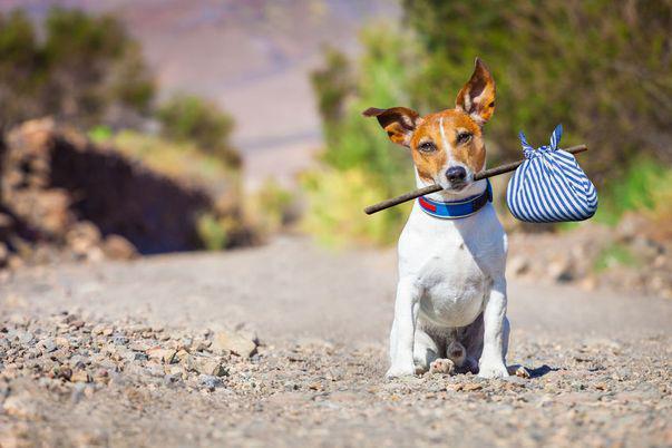 de ce e bine sa adopti un câine maidanez