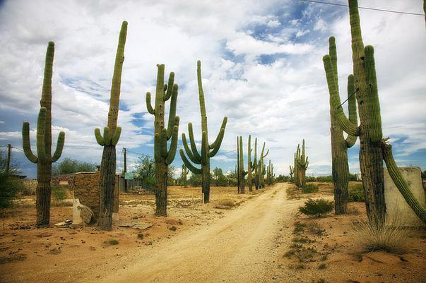 Te-ai întrebat cum supraviețuiește un cactus în deșert?