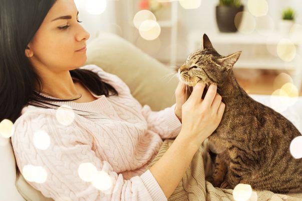 Pisicile se atașează de stăpânii lor la fel de mult precum copiii