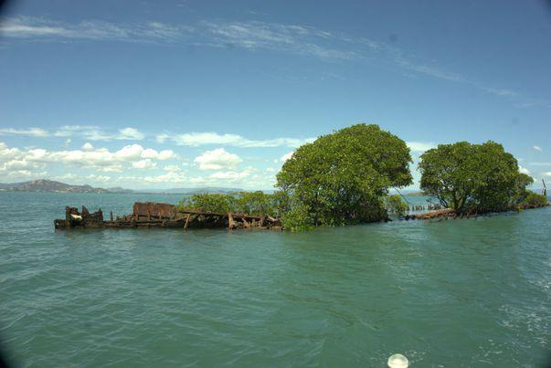 un vas blestemat salvat de natură