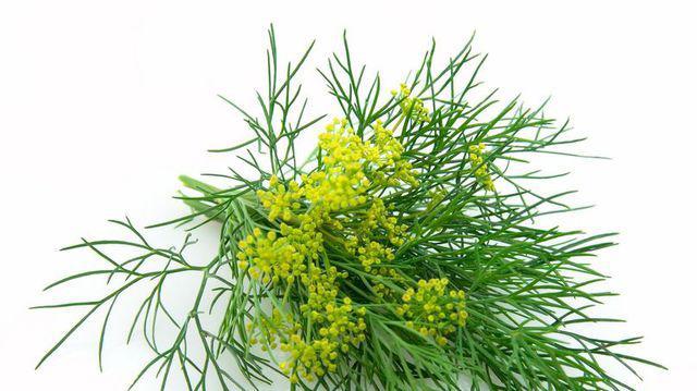 tratamentul articulațiilor semințelor de mărar)