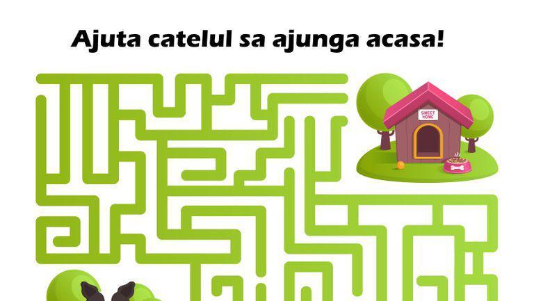 Labirint: ajuta catelul sa ajunga acasa